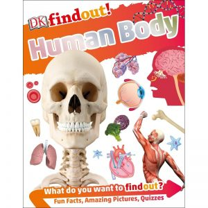 DK Find Out! Human Body